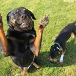 Návštěvníci psího hotelu